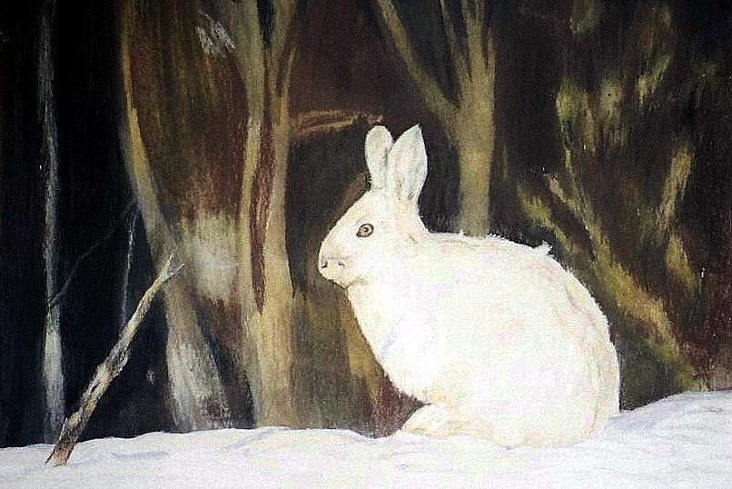 Snowshoe Hare Painting - Evening Snow by Debra Sandstrom