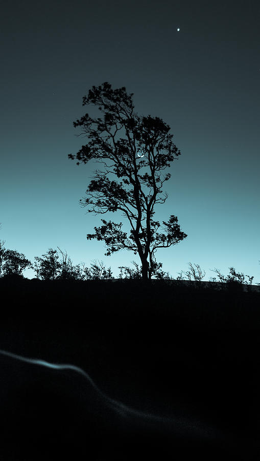 Silhouette Photograph - Evening Solitude by Craig Watanabe