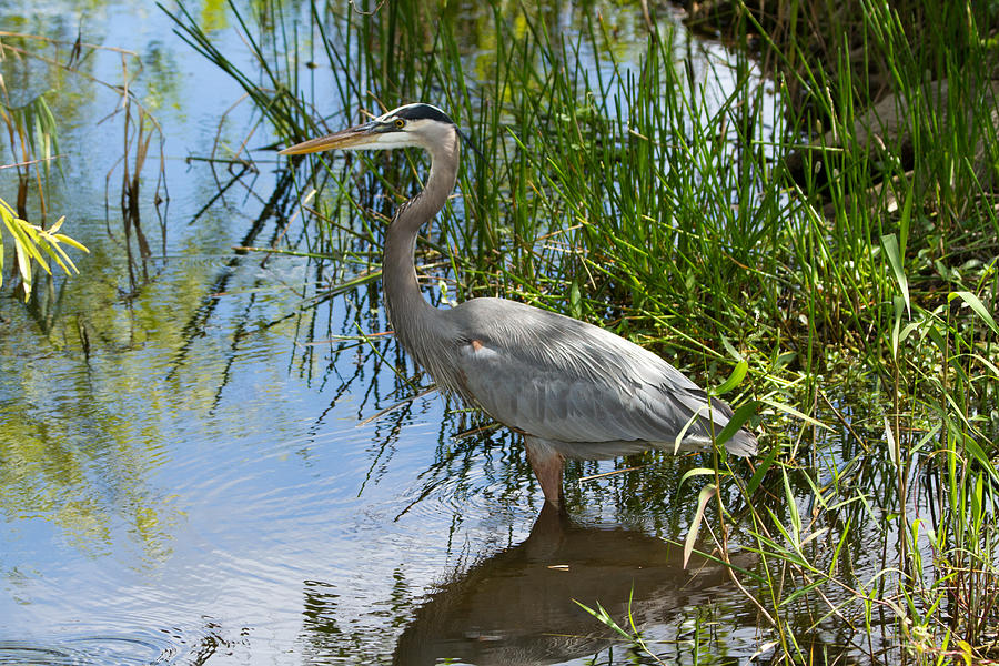 Everglades 572 by Michael Fryd