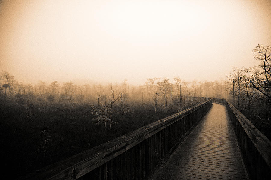 Cypress Swamp Photograph - Everglades Boardwalk by Gary Dean Mercer Clark