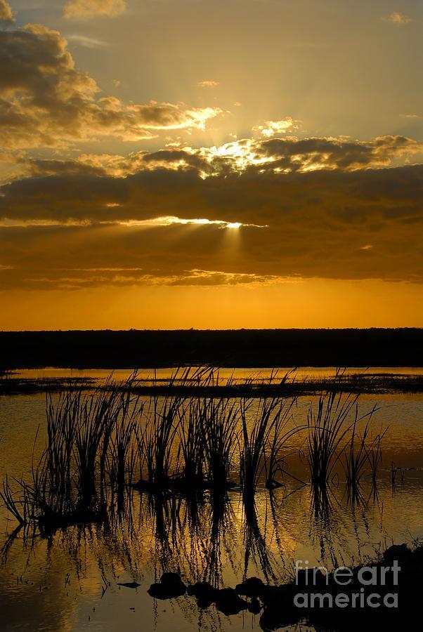 Everglades National Park Florida Photograph - Everglades Evening by David Lee Thompson