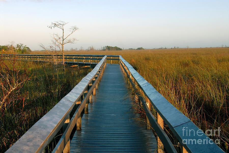 Everglades National Park Florida Photograph - Everglades National Park by David Lee Thompson