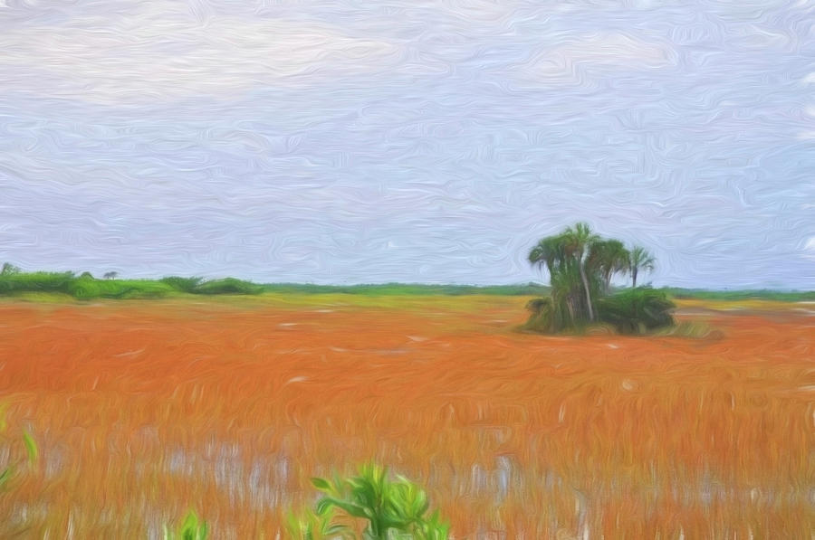 Everglades National Park Sawgrass by Ginger Wakem