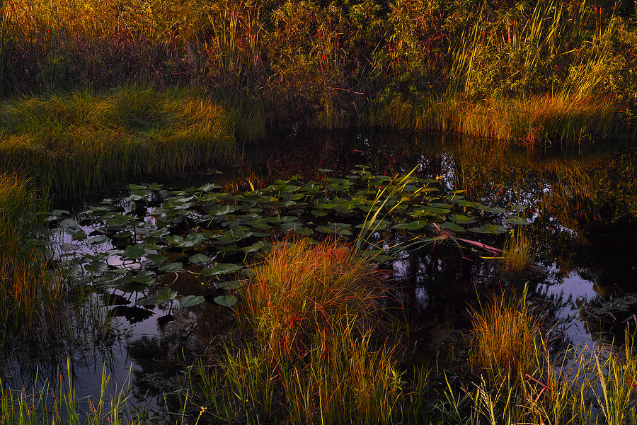 Wetland Photograph - Everglades Pond by Roberto Aloi