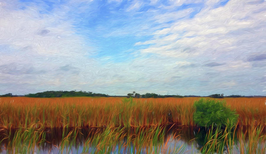 Everglades Sawgrass and Clouds by Ginger Wakem