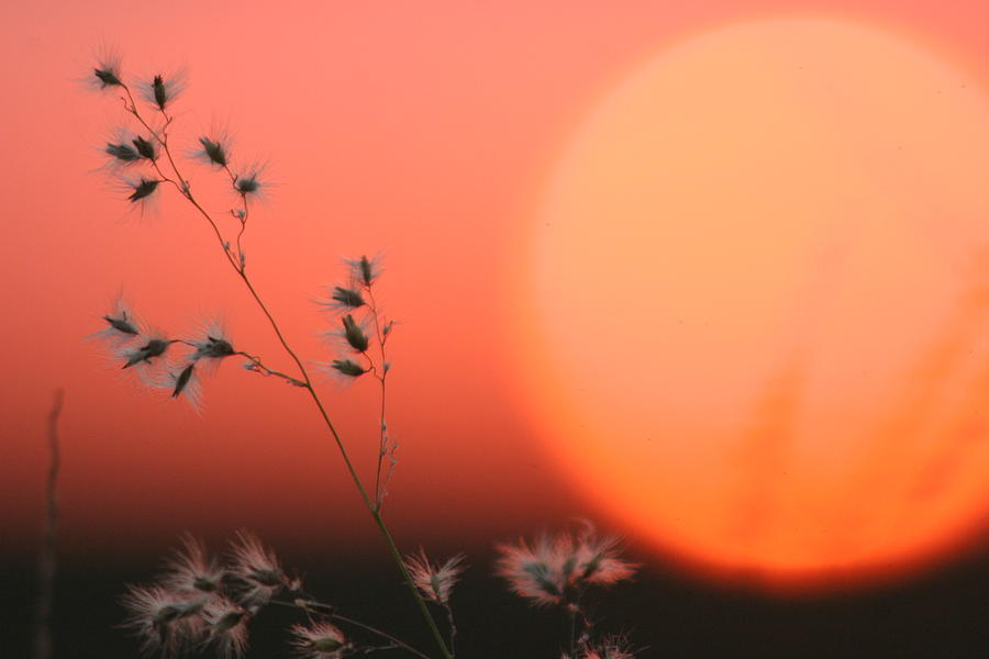 Sunset Photograph - Everglades Sunset by Beth Vasquez