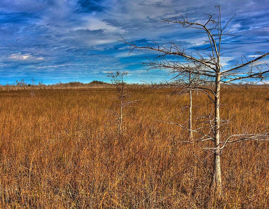Florida Photograph - Everglades by William Wetmore