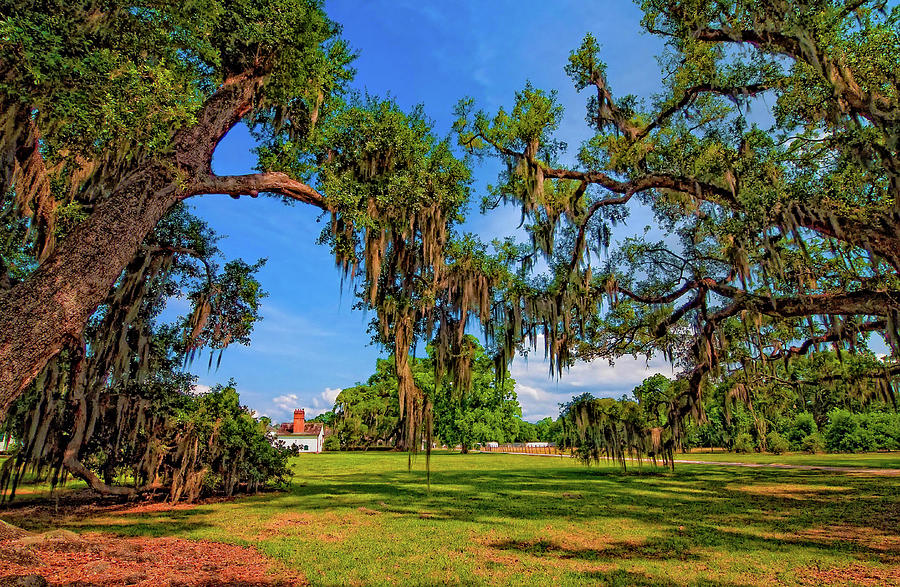 Evergreen Plantation Photograph - Evergreen Plantation by Steve Harrington