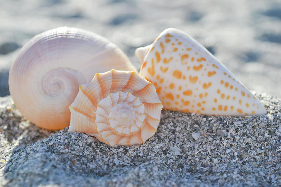 Every Shell Has A Story by Melanie Moraga