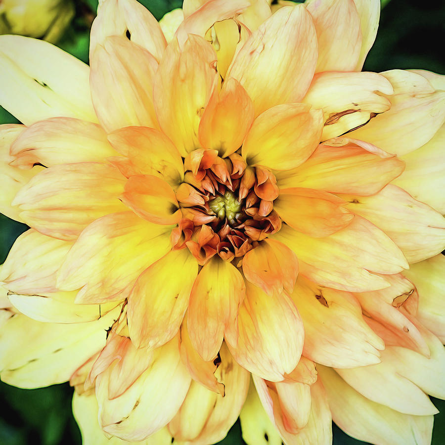 Yellow Photograph - Everything Has Beauty by Jessica Manelis