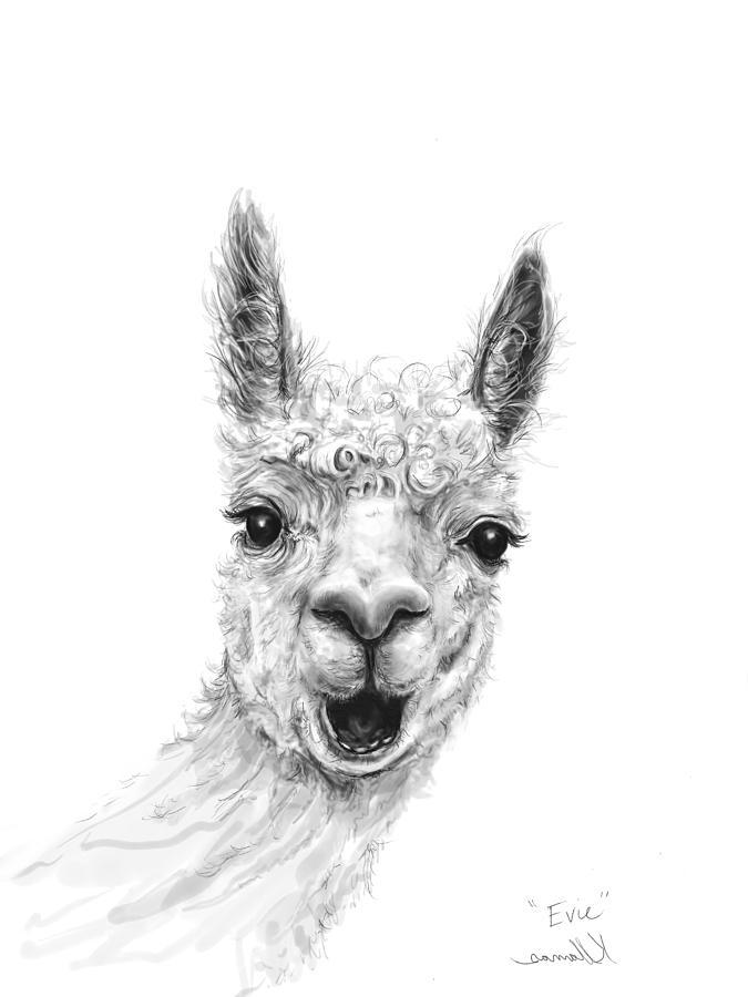 Llamas Drawing - Evie by K Llamas
