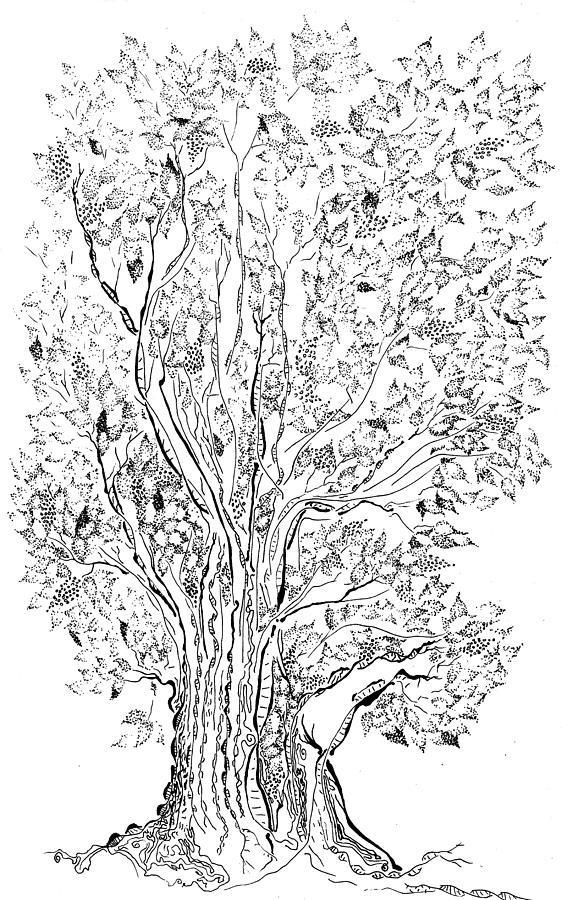 Dna Drawing - Evolutionary Tree by Regina Valluzzi
