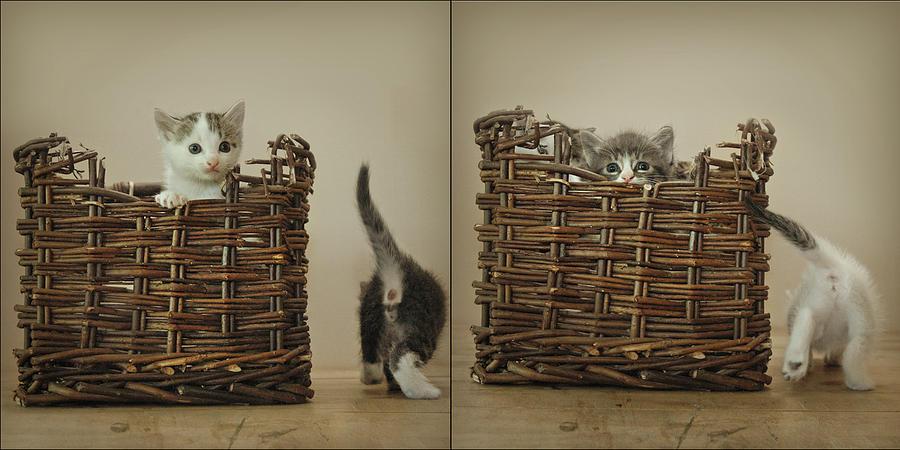 Kittens Photograph - Exchange by Inesa Kayuta