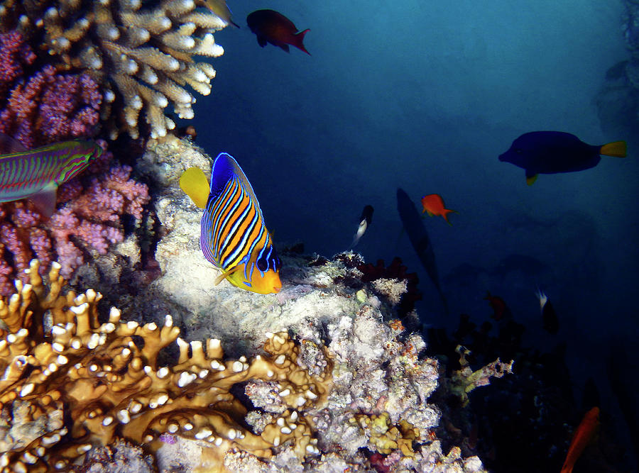 Sea Photograph - Exciting Red Sea World by Johanna Hurmerinta