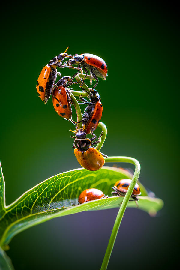 Ladybugs Photograph - Exclamation Period by TC Morgan