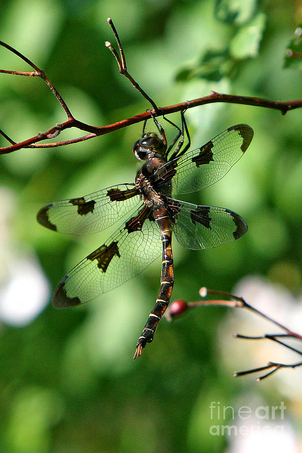 Dragonfly Photograph - Exercise  by Marle Nopardi