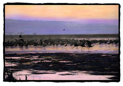 Birds Photograph - Exodus by Padgett Mcfeely