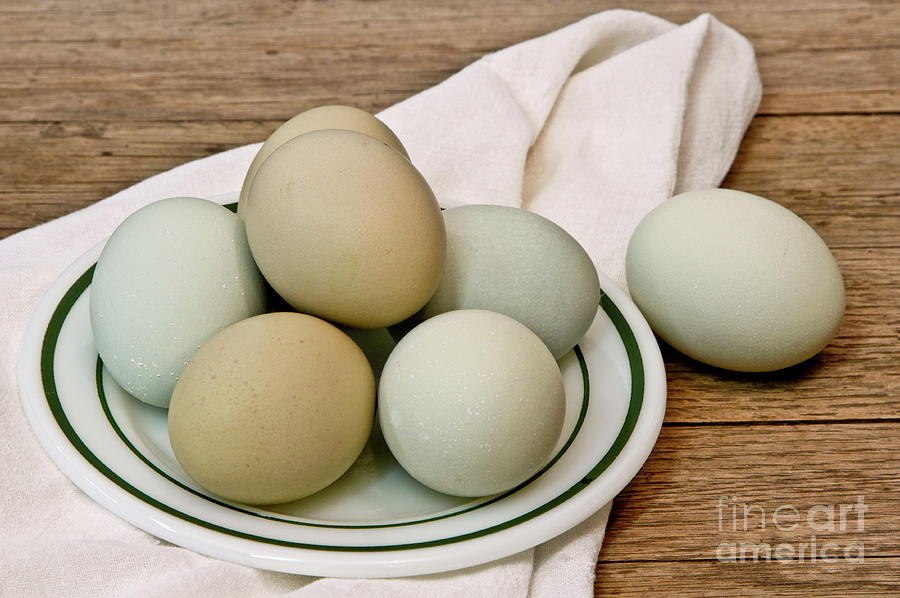 Exotic Colored Chicken Eggs by Pattie Calfy