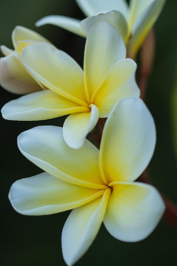 Tropical Photograph - Exotic by Julie Andel