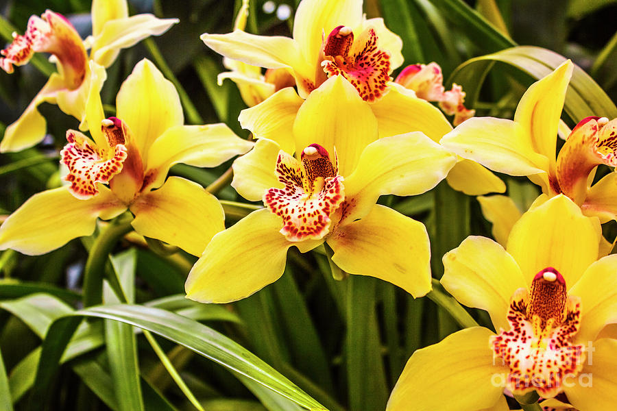 Exotic Orchids Photograph by Jorgo Photography - Wall Art Gallery