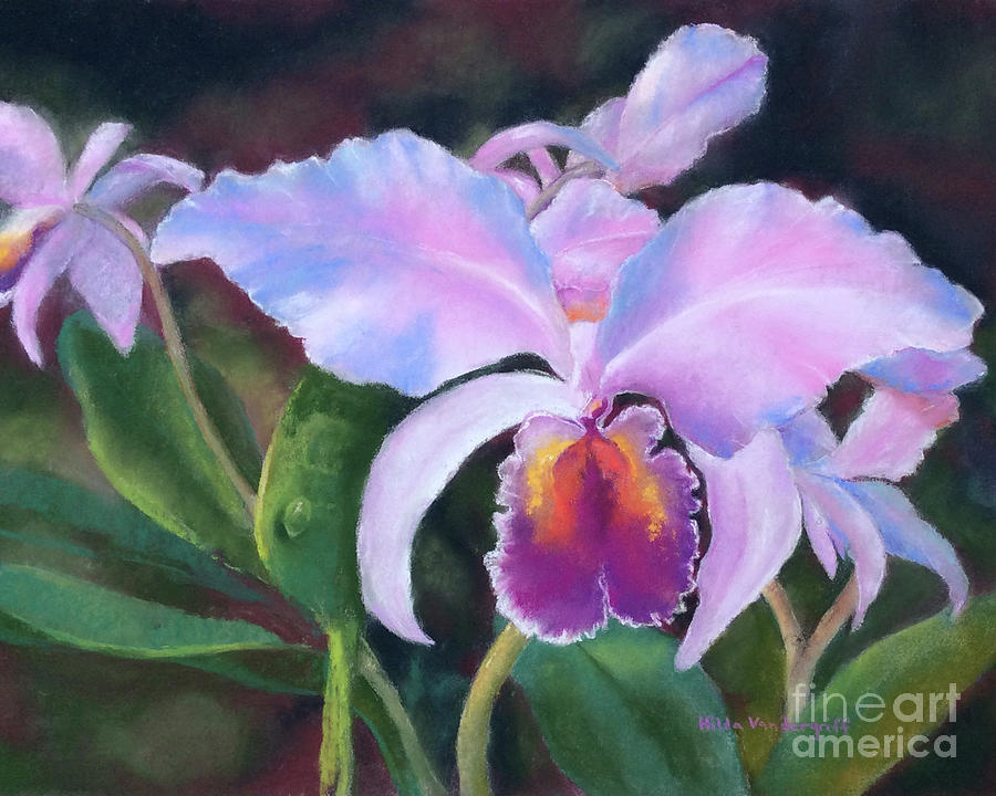 Exotic Pink Orchid by Hilda Vandergriff