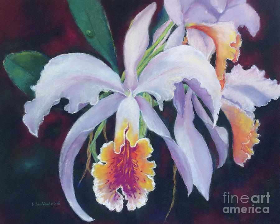 Exotic White Orchid by Hilda Vandergriff