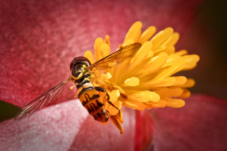 Dof Photograph - Exploring A Flower by Ryan Kelly