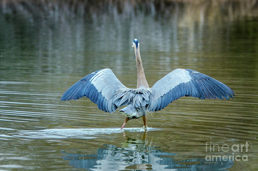 Bird Photograph - Expose Yourself to Nature by Emily Bristor