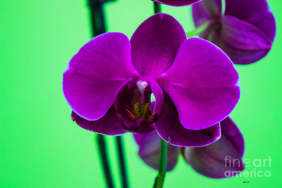 Exposed Photograph - Exposed Orchid by Roberta Byram