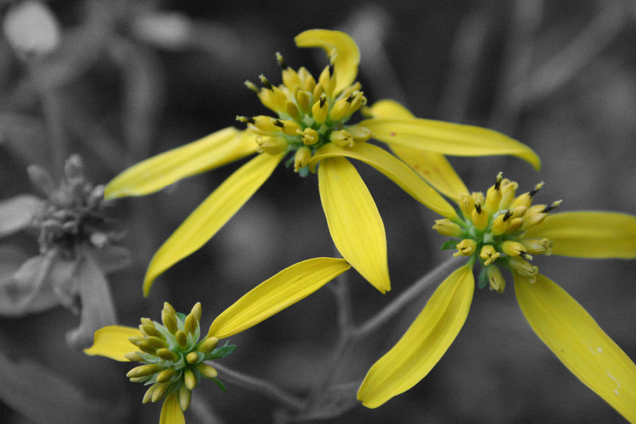 Flower Photograph - Extended Family by Dylan Punke