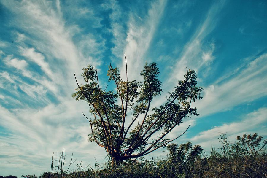 Tree Photograph - Extension Arm Of A Tree by Rendy Olii