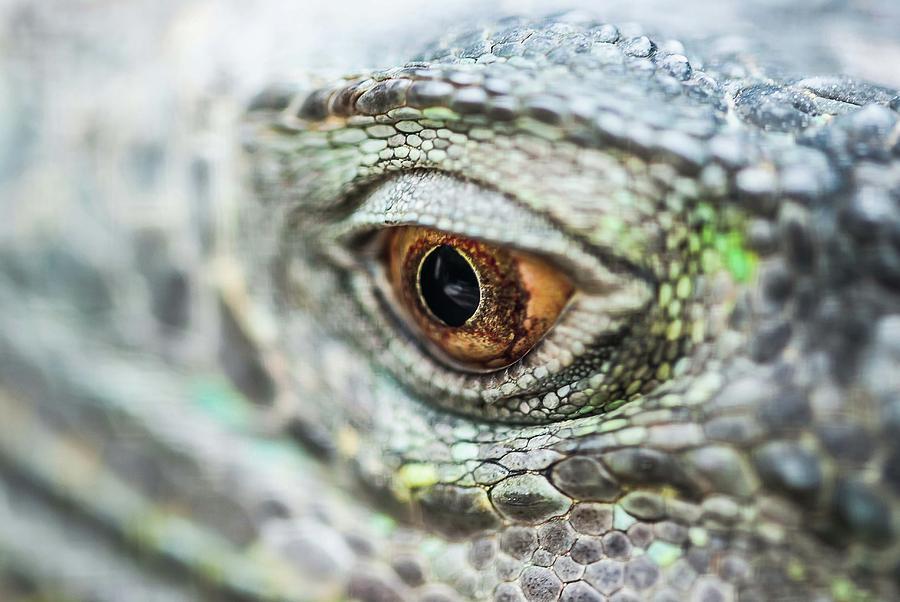 Eye - 0162 by G L Sarti