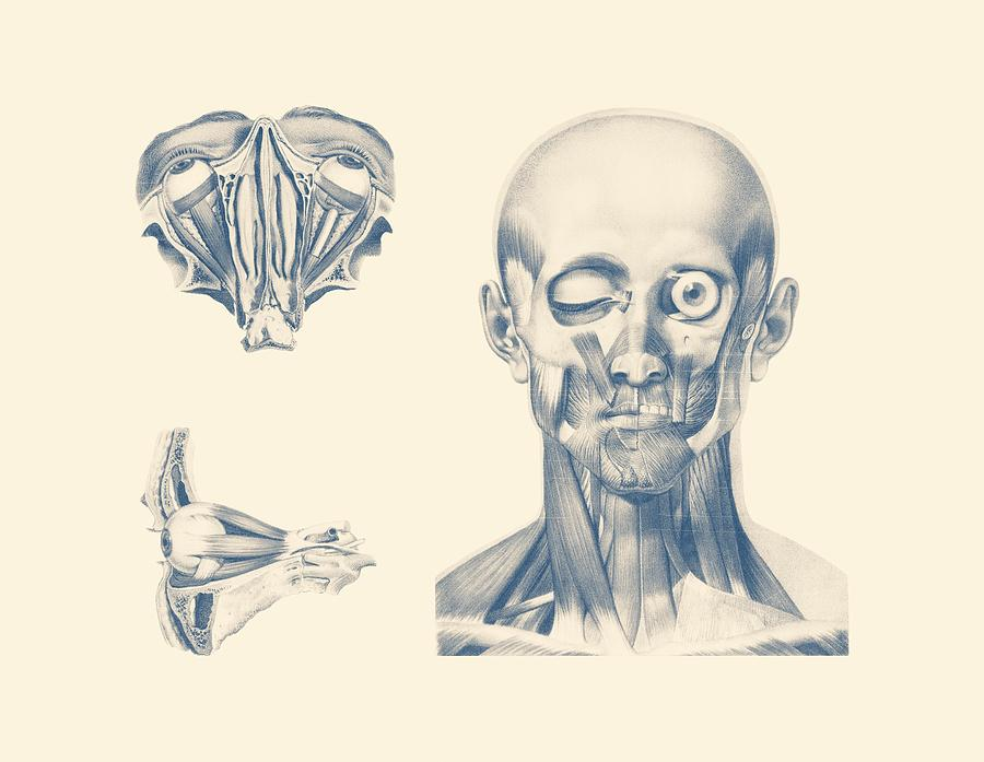 Eye Diagram - Multiview - Vintage Anatomy Poster Drawing by Vintage ...