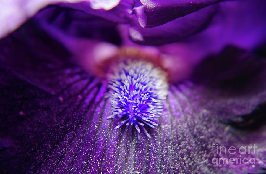 Flowers Photograph - Eye Of Iris Nature Photograph by Melissa Fague
