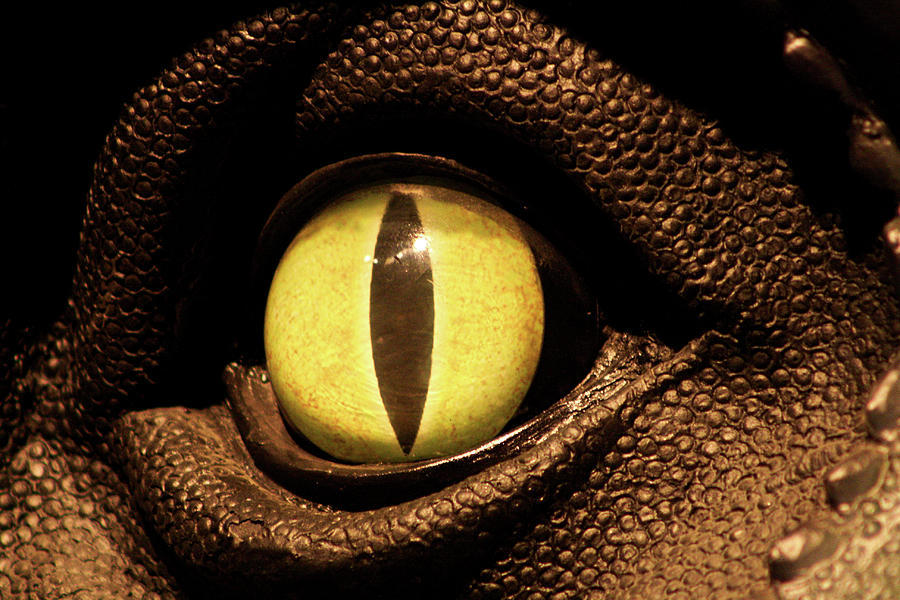 Eye Of The Dino Photograph