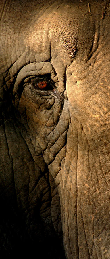 Eye Of The Elephant Photograph by Greg and Chrystal Mimbs