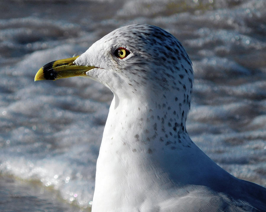 Eye of the Gull by Robb Stan