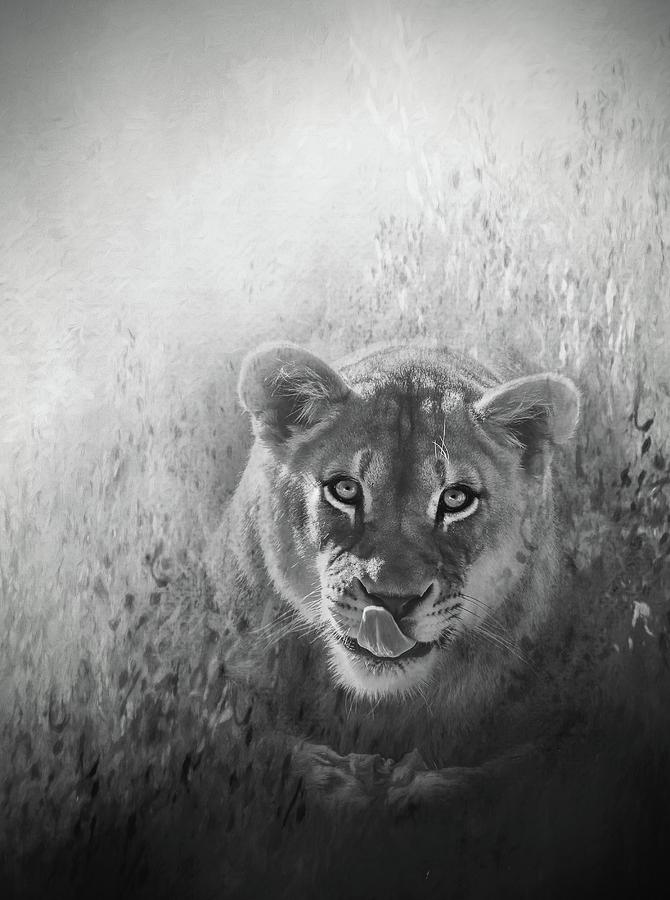 Eye Of The Lion Photograph