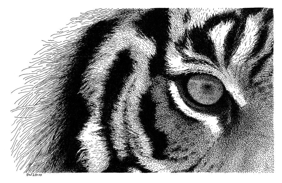 Eye Of The Tiger Pics eye of the tiger drawingscott woyak
