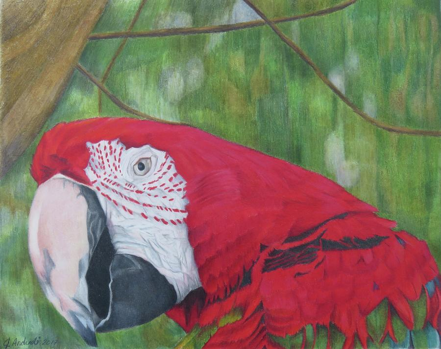 Parrot Drawing - Eye On You by Jenny Andreoli