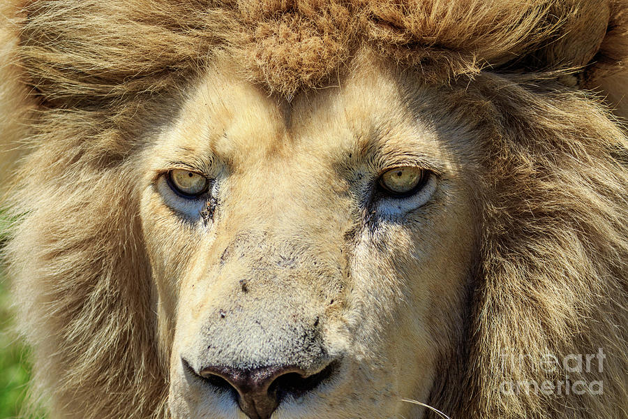 Wildlife Photograph - Eye See You by Jennifer Ludlum