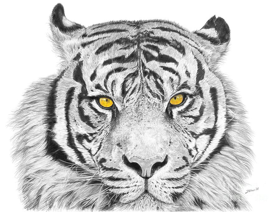Tiger Drawing - Eyes Of The Tiger by Shawn Stallings