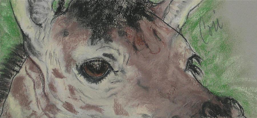 Giraffe Drawing - Eyes On You by Cori Solomon