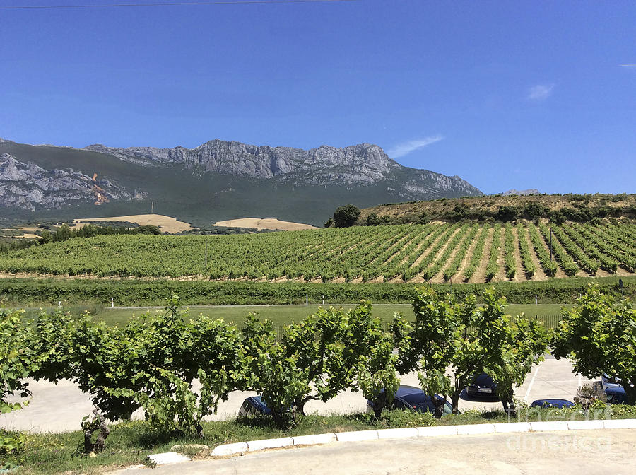 Landscape Photograph - F 41 Ugarte Vineyards Rioja by Norberto Torriente