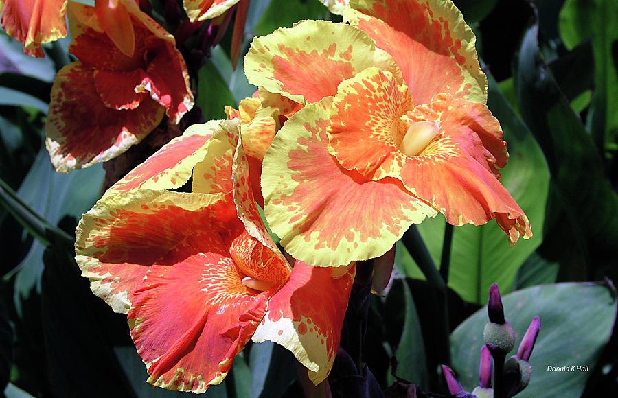 Photograph Photograph - F24 Cannas Flower by Donald k Hall