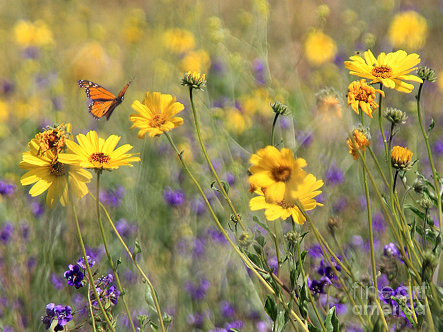 Flowers Photograph - f5 by Tom Griffithe