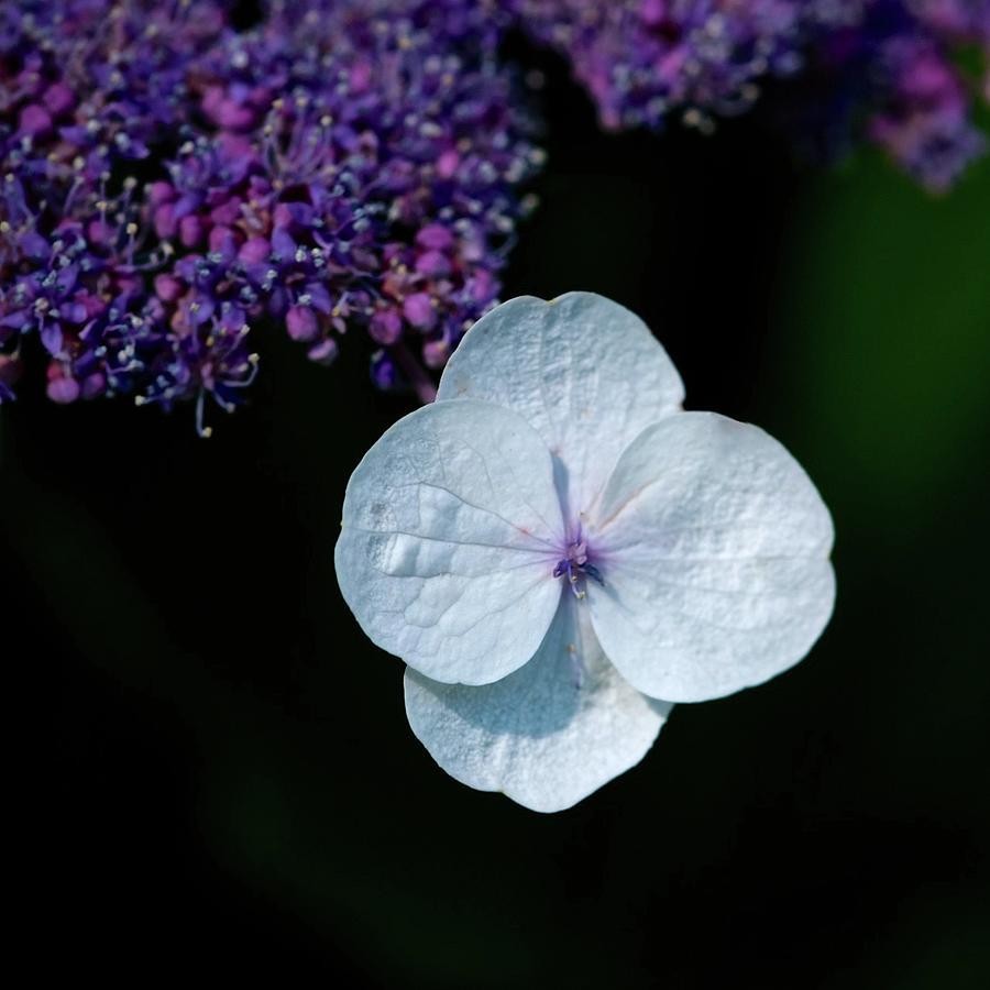F54 purple Heart by Sarah-l Singer