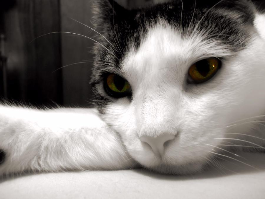 Cat Photograph - Fabulous Feline by JAMART Photography