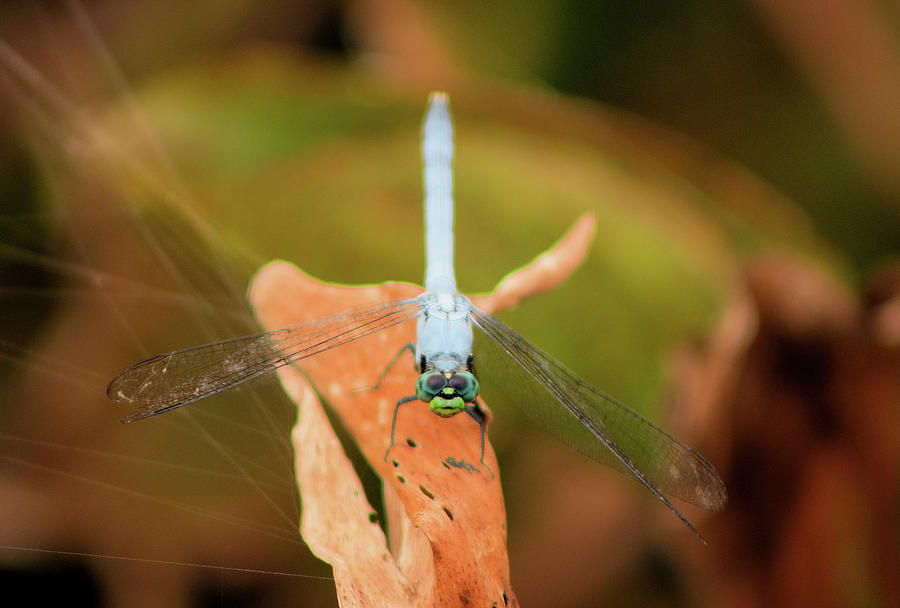 Dragonfly Photograph - Face Of The Dragon by Karl Ford