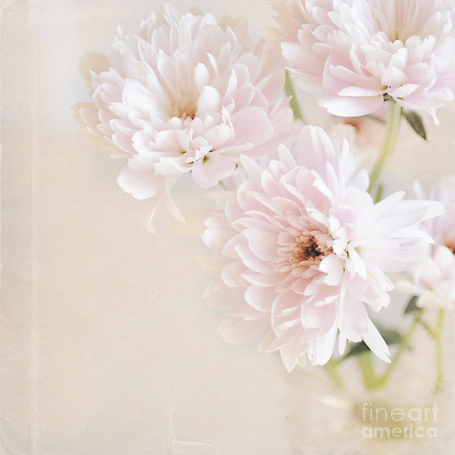 Flowers Photograph - Faded Dream by Lyn Randle